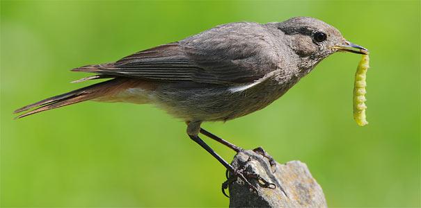Vogelarten Brandenburg