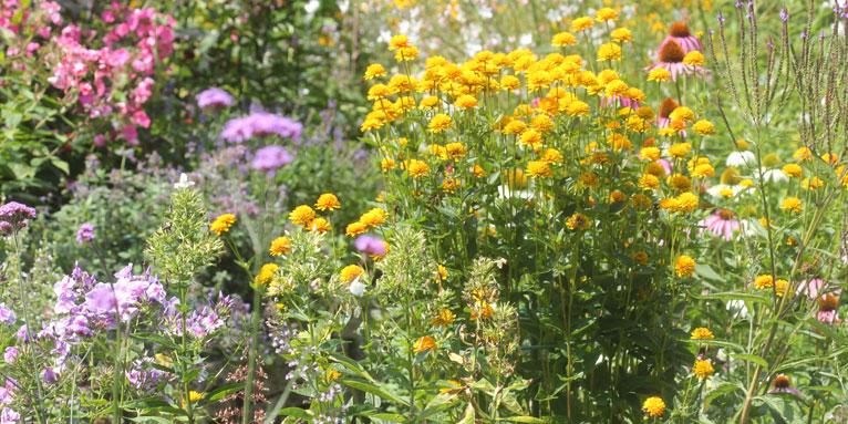 150611-nabu-sommerlicher-staudengarten-helge-may-766x383.jpeg